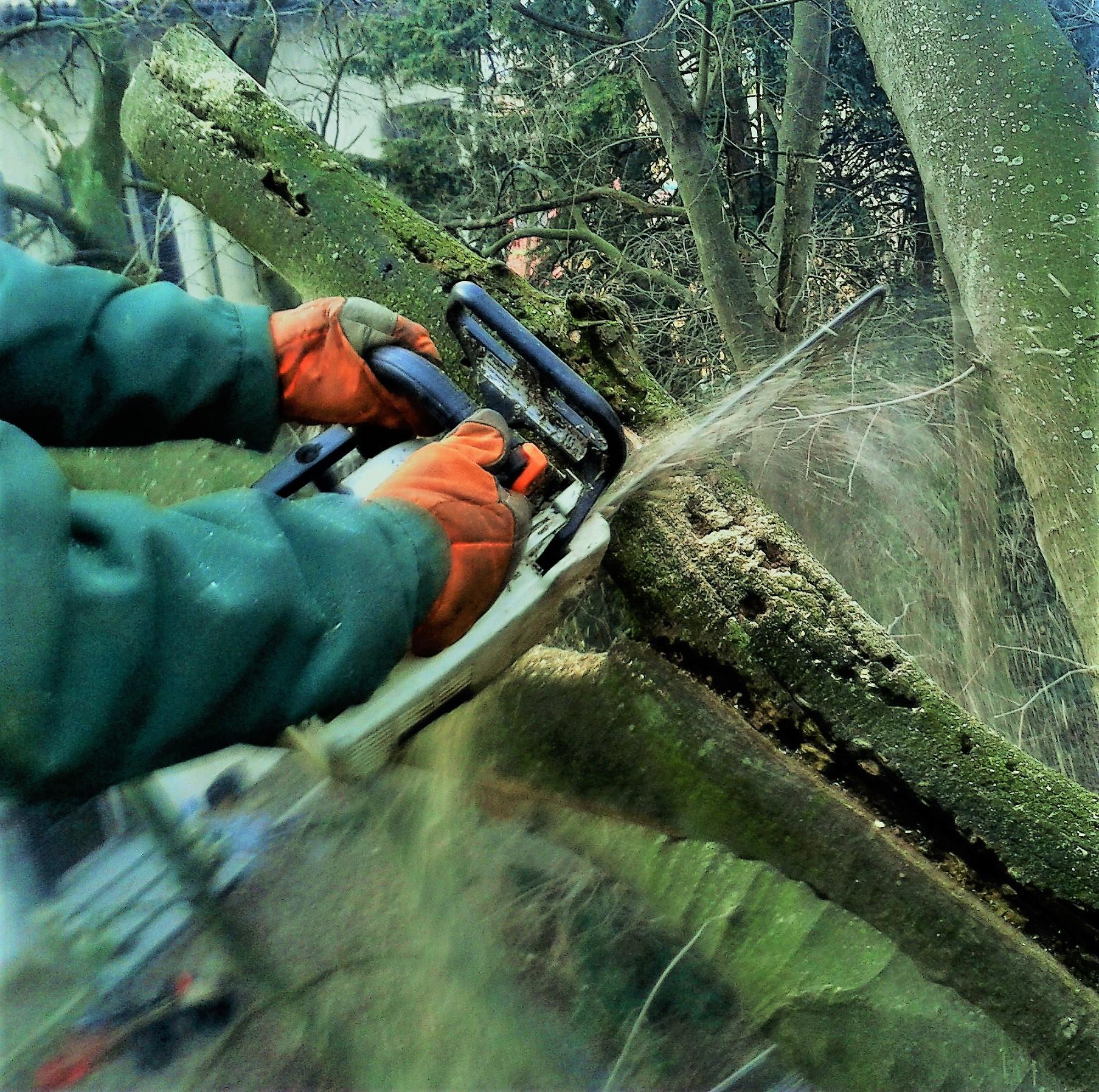 Potature Gallarate Manutenzione del verde