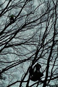 Treeclimbing potatura gallarate giardiniere manutenzione del verde